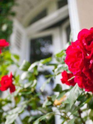 Le jardin - La Maison Jules - Chambres d'hôtes Touraine.jpg