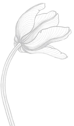 Le logo tulipe de la Maison Jules